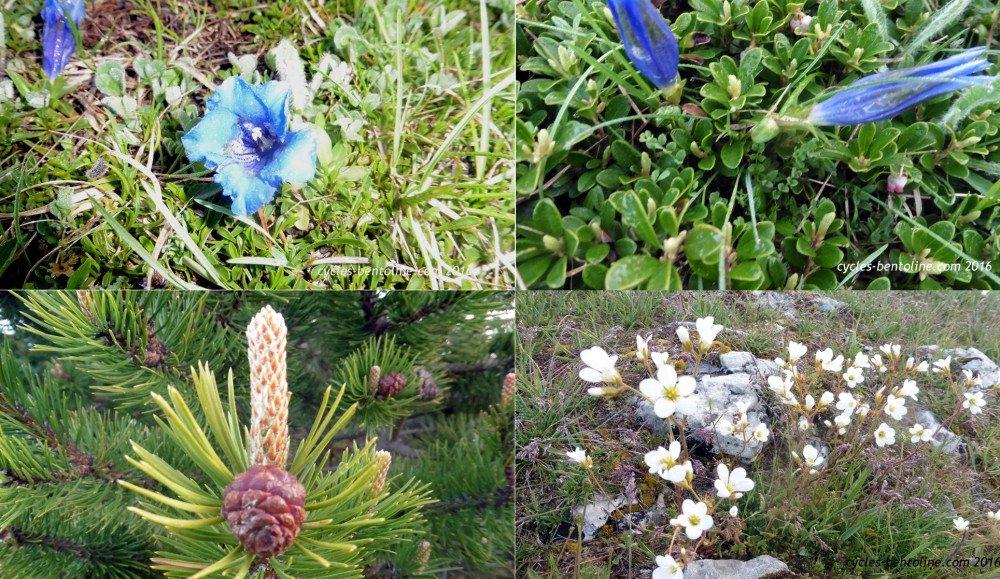 Flore du mois de juin